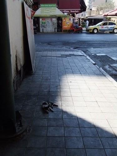 アテネ_中央市場の猫さん (1)