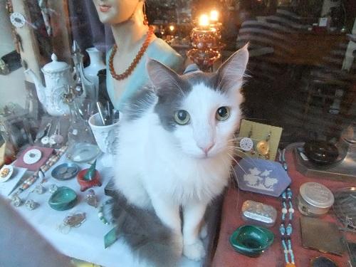アテネ_店番猫さん (1)