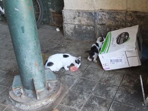 中央市場の猫さん親子