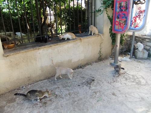 アクロポリス北の猫さん (2)