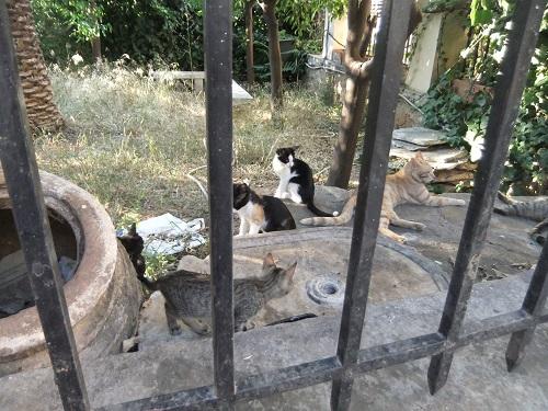 アクロポリス北の猫さん (1)
