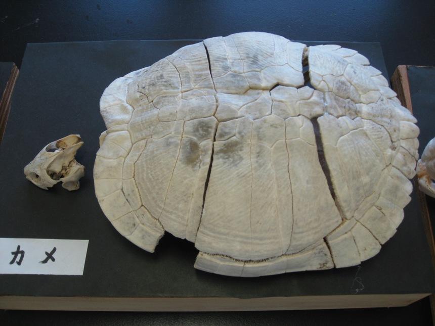 骨格標本_01b