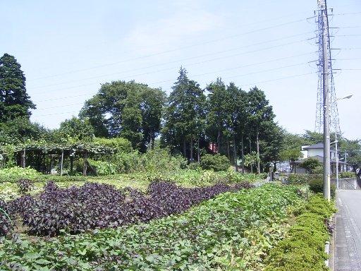 臼井塚古墳