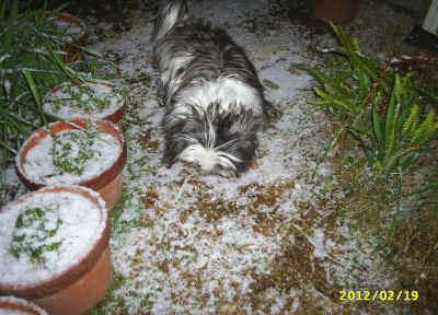 久し振りの雪が冷たく感じた僕