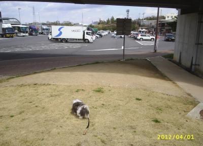 名神高速道の草津PAで車を見ている僕