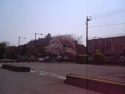 桜が咲いた裁判所から観た丸亀城