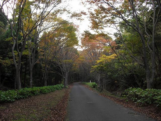 観音山公園-3