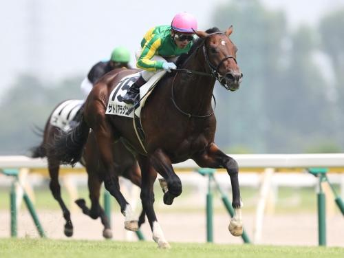 【競馬】岡田総帥「サトノアラジンは菊花賞で勝ち負け」