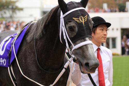 【競馬】牡馬から見た美人な牝馬