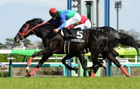 【競馬】来年重賞勝ちそうな条件馬2014-2015