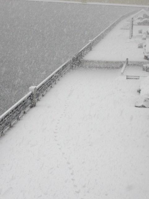 雪 蔵前橋 下