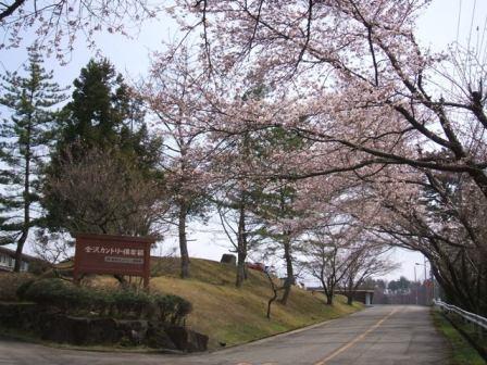 桜2012-01