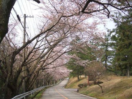 桜2012-02