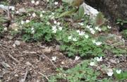 御前山の花1-1-1