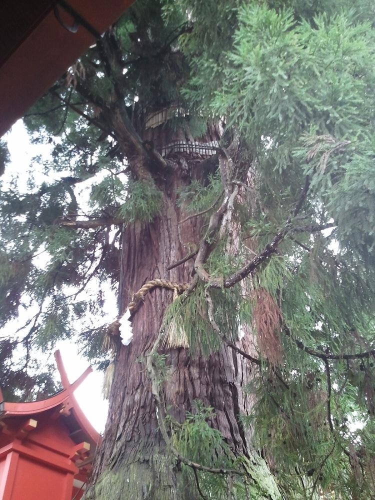 春日神社の木