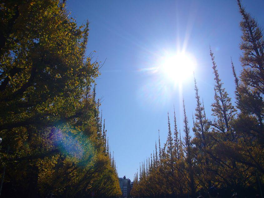 2011年12月3日神宮外苑銀杏並木