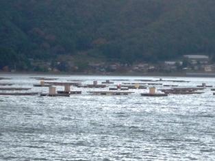 蘇洞門巡り 牡蠣の養殖