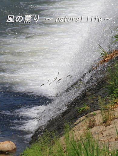滝のぼり・ブログup