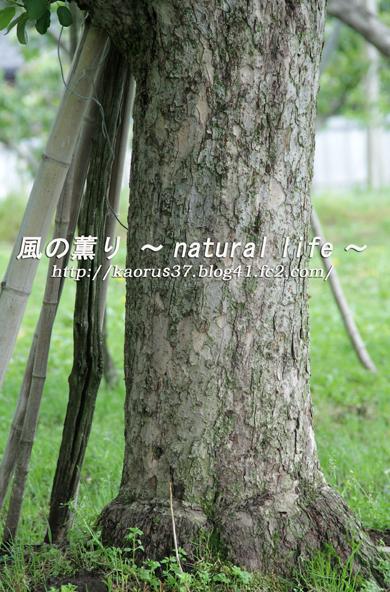 林檎の木・ブログup