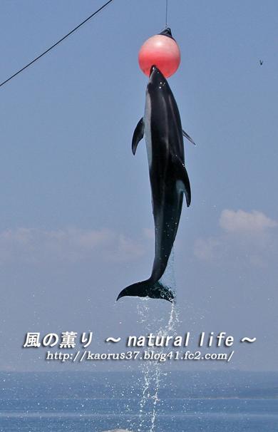 能登島水族館・イルカボールにジャンプ・ブログup