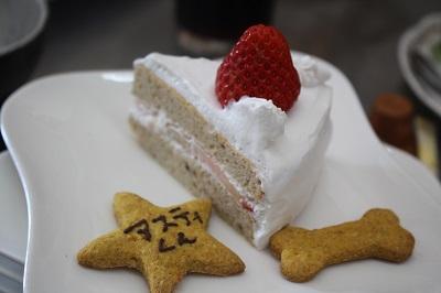 アスティくんのケーキ