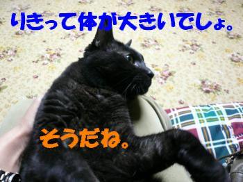 P1000893_convert_20101001003135.jpg