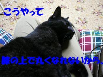 P1000898_convert_20101001003234.jpg