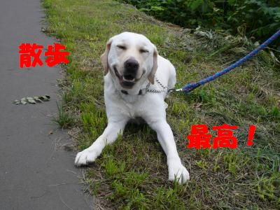 P1000917_convert_20100803232153.jpg