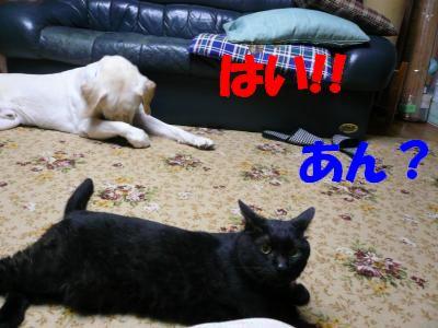 P1000943_convert_20100811234257.jpg