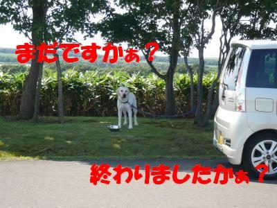 P1000965_convert_20100817235005.jpg