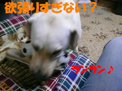 P1010094_convert_20100830004709.jpg