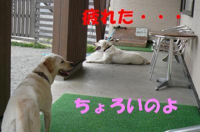 P1020366_convert_20110627171826.jpg