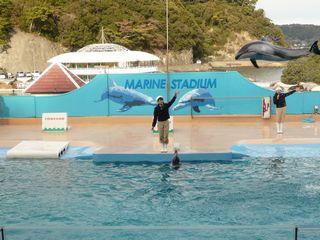 イルカのジャンプ1