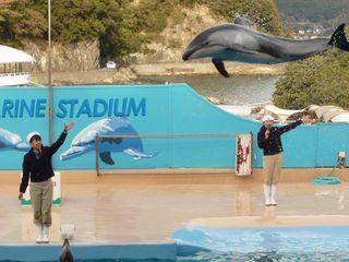 イルカのジャンプ2