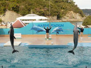 イルカのジャンプ3