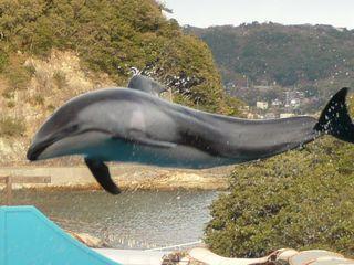 水族館 イルカのジャンプ2の1