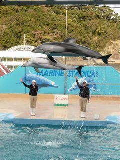イルカのジャンプ4
