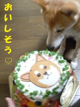 クーとケーキ