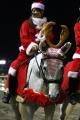 131220川崎12Rホワイトクリスマス賞 誘導馬-03 トゥインクルジョイ