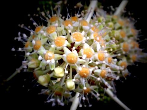 花虻と花2