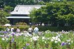 菖蒲園から秋元邸を見る