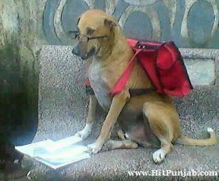 インドの犬 3