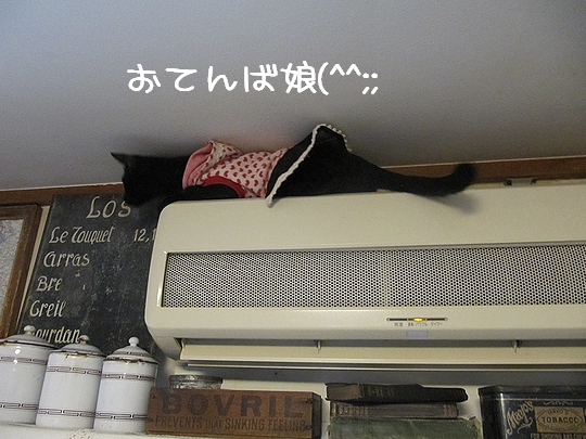 おてんば娘.jpg