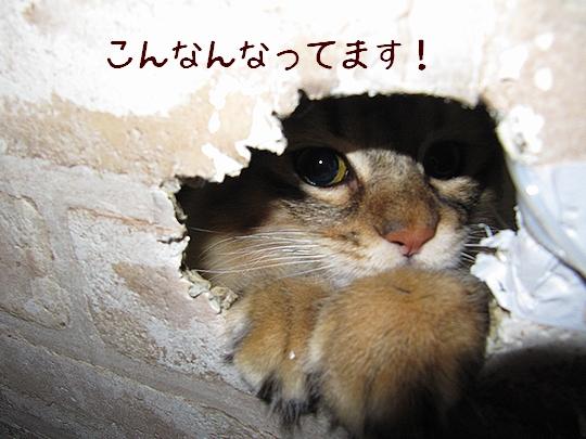 穴?.jpg