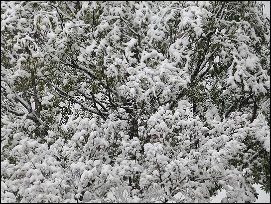 雪が重そう.jpg