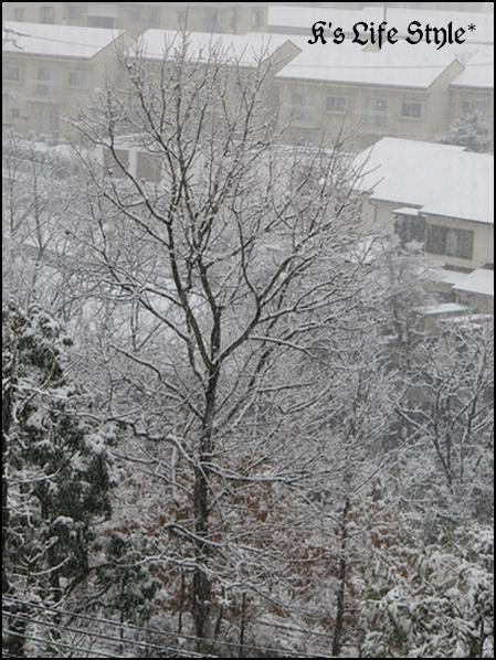 大雪です.jpg