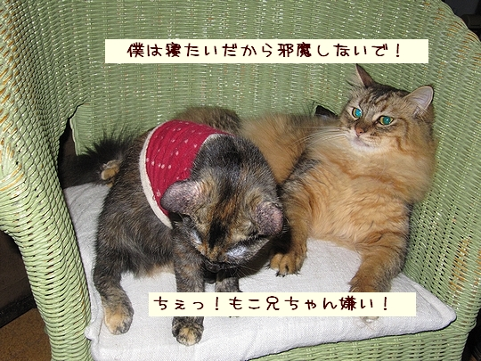 ちぇっ!.jpg