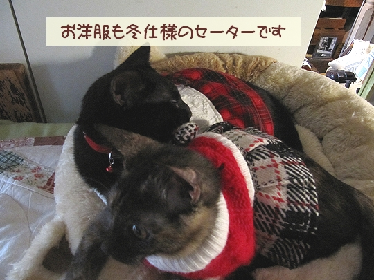 冬仕様.jpg