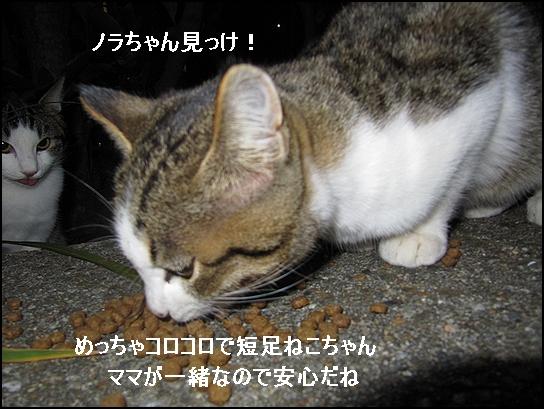 ノラちゃん.jpg
