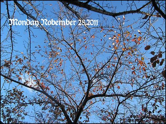 秋の桜.jpg